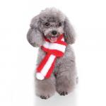 Bắt bệnh chó Poodle: bị Nôn, Tiêu Chảy, Ho & cách chữa trị (P1)