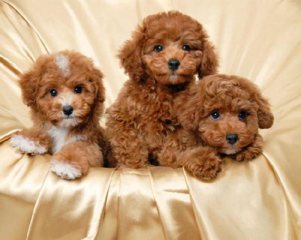 Các em cún tại Milu Xinh xin chào mọi người ạ!