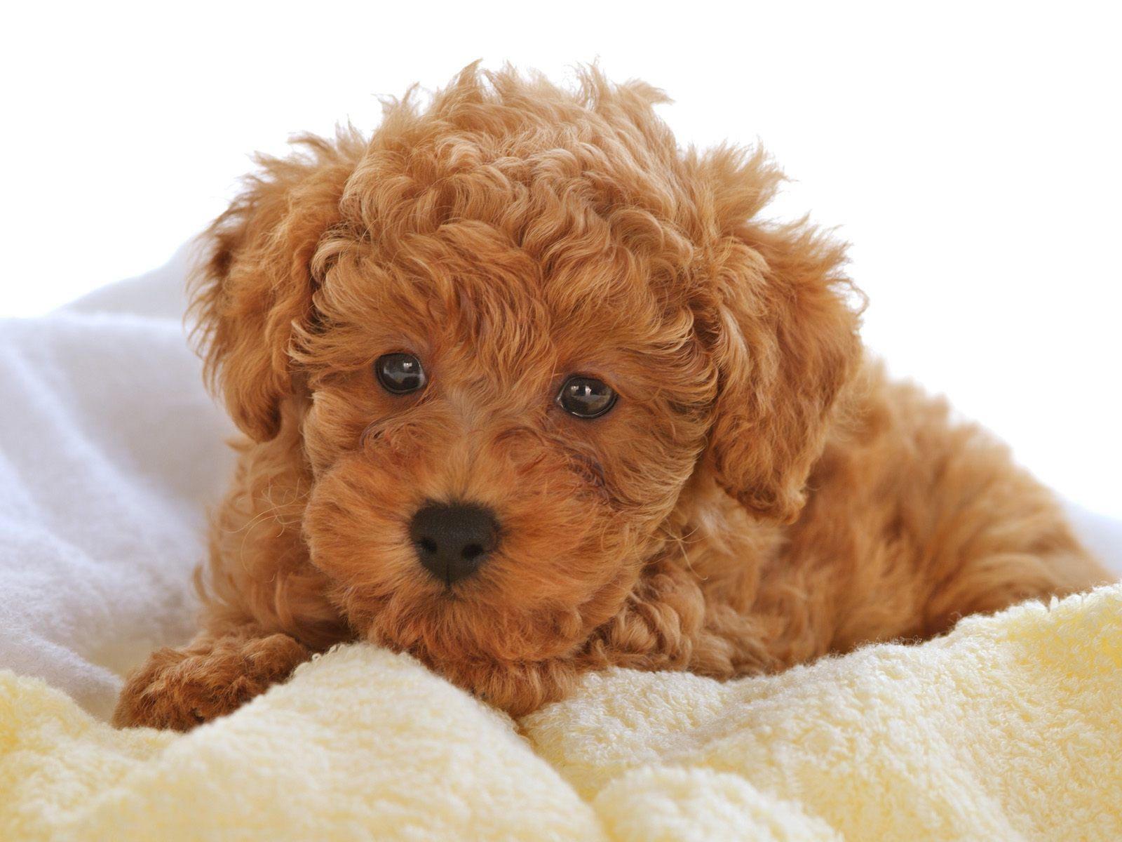một chú cún xinh của Milu Xinh